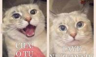 Kai tu patinki katiniukui