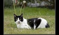 Apsukrus katiniukas