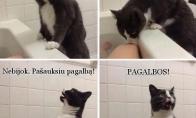 Katiniukas - gelbėtojas