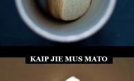 Pasaulis Pringles akimis