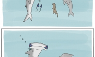 Kam kūjagalviui rykliui maudymkė?