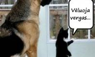 Katino ir šuns reakcija į šeimininką