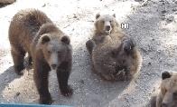 Linksmuolių gyvūnų GIF rinkinys