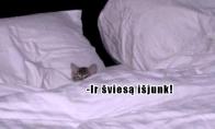 Katinai rytais
