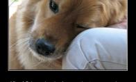Geriausias žmogaus draugas