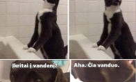 Kaip nelaimei ištikus elgiasi katinas ir šuo