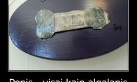 Penio ir algalapio panašumai
