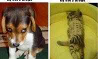 Šuns ir katino skirtumai