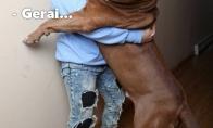 Kai tu šuniui nebe šeimininkas