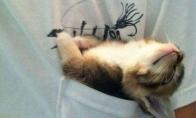Juokingai miegantys katukai [GALERIJA]