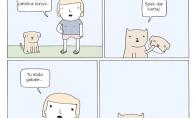 Užsislėpęs katukas