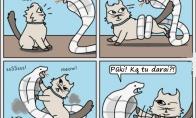 Kodėl katiniukai viską niokoja?
