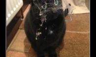 Neglostytas katinas