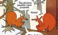 Užsimiršusi voverė
