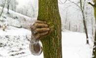 Kaip ranka medį smaugė