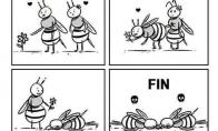 Bičių meilė