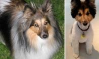 Kaip šunis pakeičia geras apkirpimas