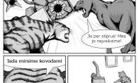 Intensyvi katinų kova