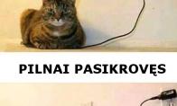 Katinų įkrovimas
