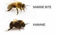 Įvairios bičių rūšys