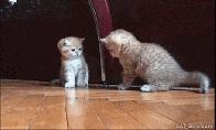 Mieliausių ir juokingiausių gyvūnų GIF rinkinys