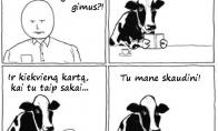 Įžeidimas karvutei