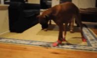 Batuotų šunelių GIF rinkinys