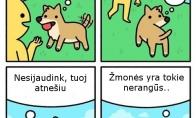 Šunų logika