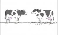 Gyvūnų pakalbėjimai [10 paveiksliukų]