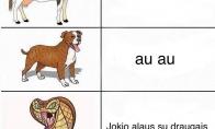 Skirtingi gyvūnų tipai