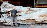 Kaip didelis medžio gabalas virto tikru meno šedevru