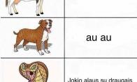 Ką kalba gyvūnai?