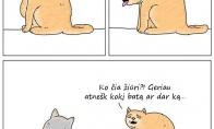 Vemiančio katino mintys