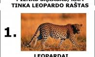 Leopardo raštas