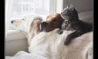 Gyvūnų paskirtis