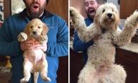 Nuo mažo šuniuko iki didelio šuns [GALERIJA]