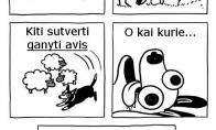 Šunų veislės