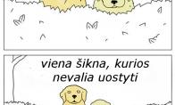 Šuns išmintis