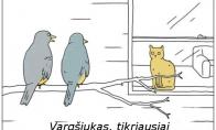 Nesusipratėliai paukščiai