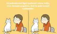 Patarimas katėms