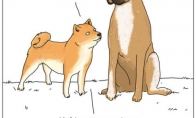 Kvapnus šuo