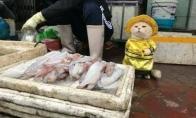 Mielasis vietnamiečio pardavėjo pagalbininkas