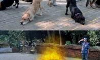 Šunų apmokymai