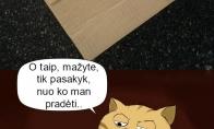 Kai tavo katinas mėgsta patikrinti atėjusius siuntinius