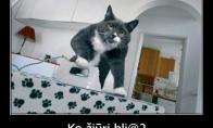 Katinas - vergas