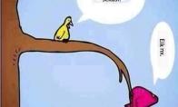 Paukštukas ant dietos