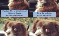 Šuo, dievinantis keliones