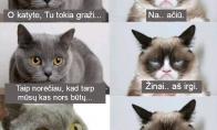 Komplimentas katytei