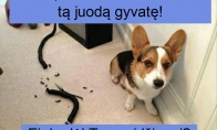 Juokingi memai su gyvūnais