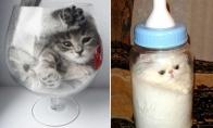 Įrodymas, jog katės yra skystis [GALERIJA]